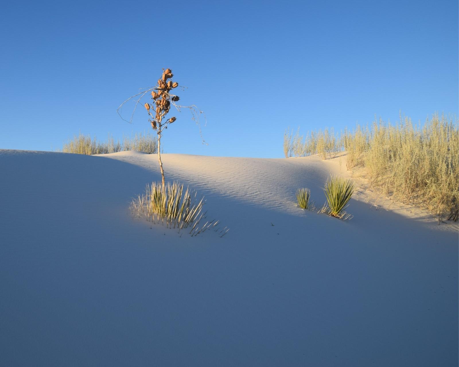 Etats-Unis - Nouveau Mexique - White Sands